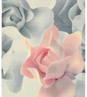 Ted Baker Porcelain Rose 57402